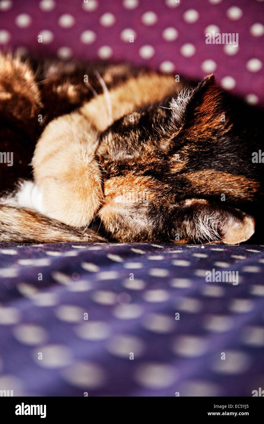 Sleeping Kitty - Stock Image