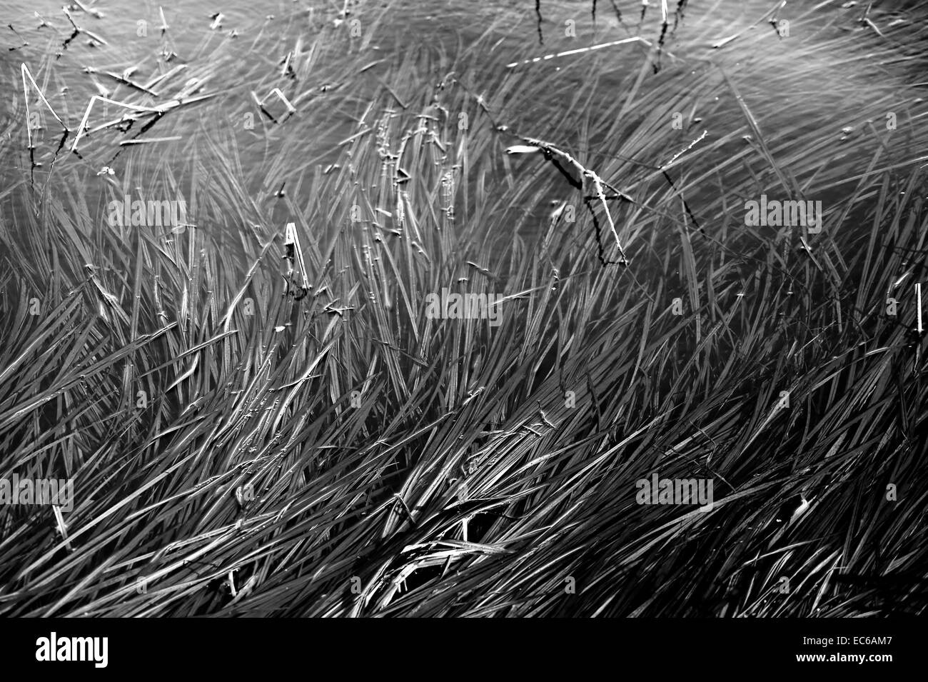 Grass in the water Stock Photo