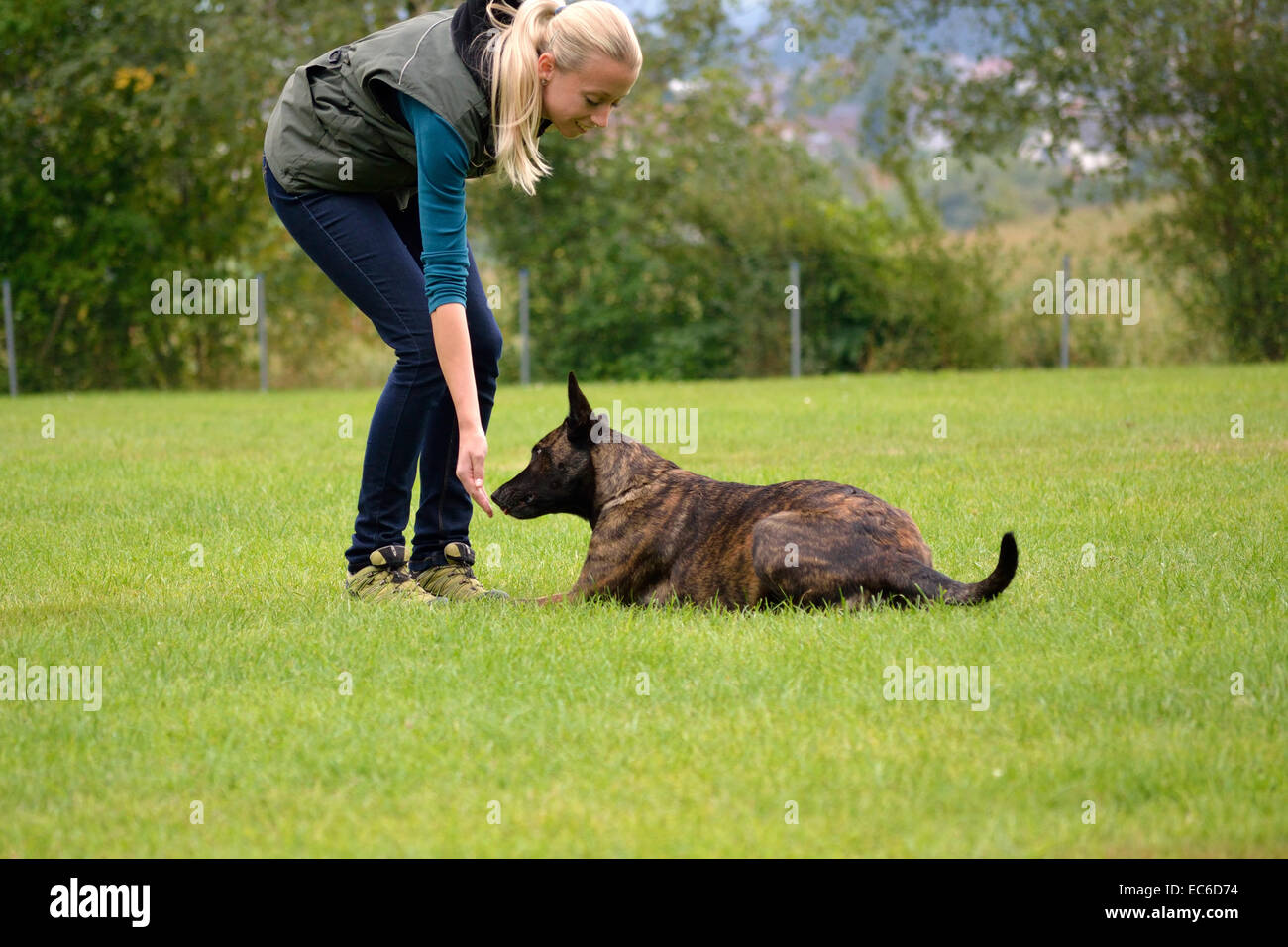 Dog is rewarded by dog trainer - Stock Image