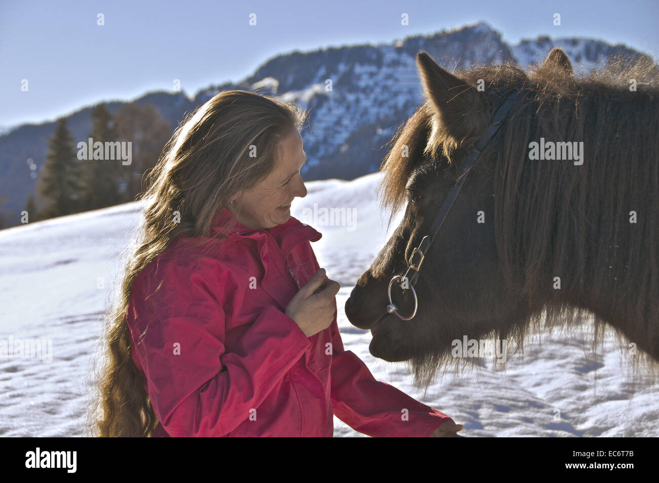longhaired woman with iceland horse Stock Photo