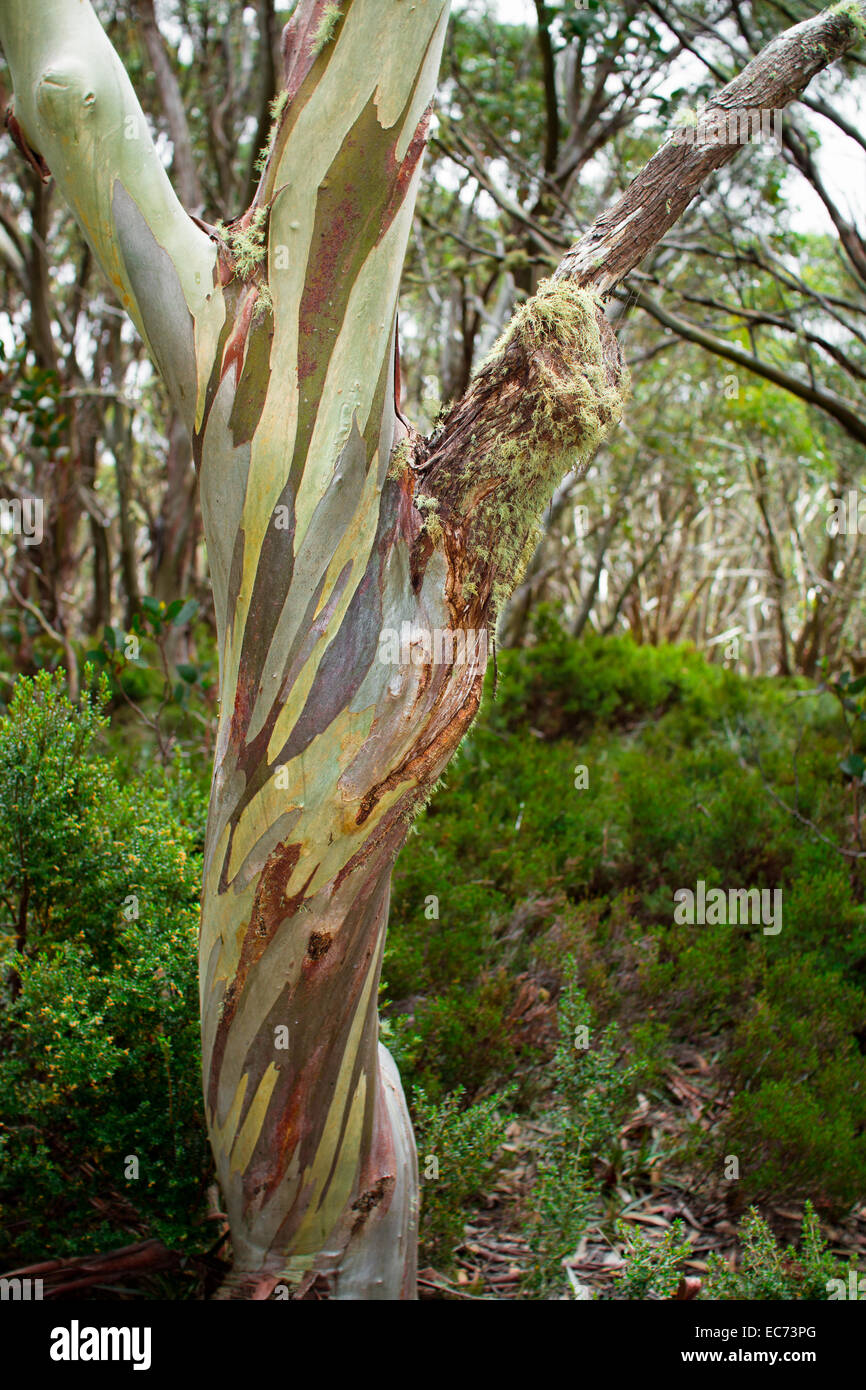 Colorful Tree Bark Stock Photos & Colorful Tree Bark Stock Images ...