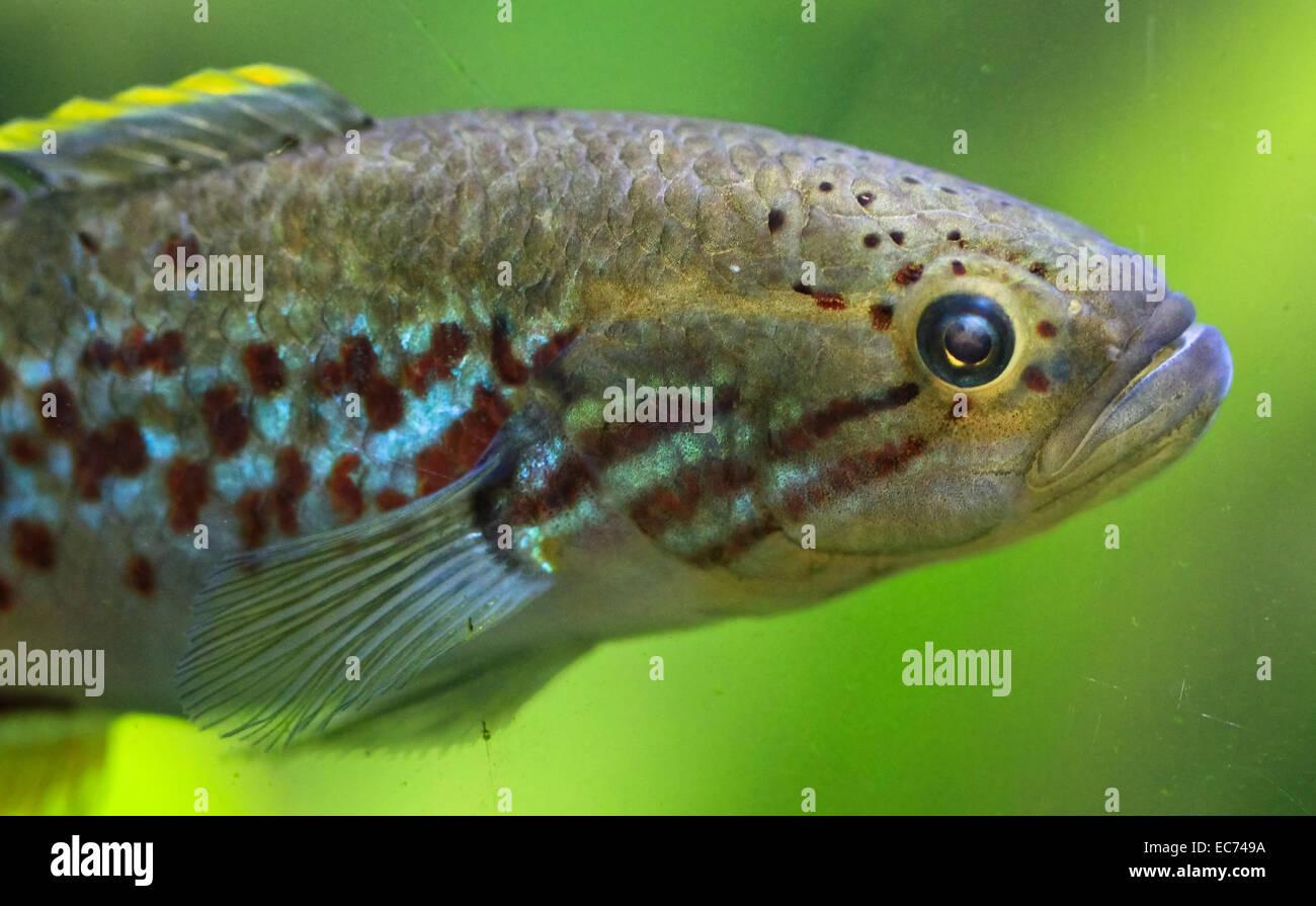 Colorful Fish Aquarium Stock Photos & Colorful Fish Aquarium Stock ...