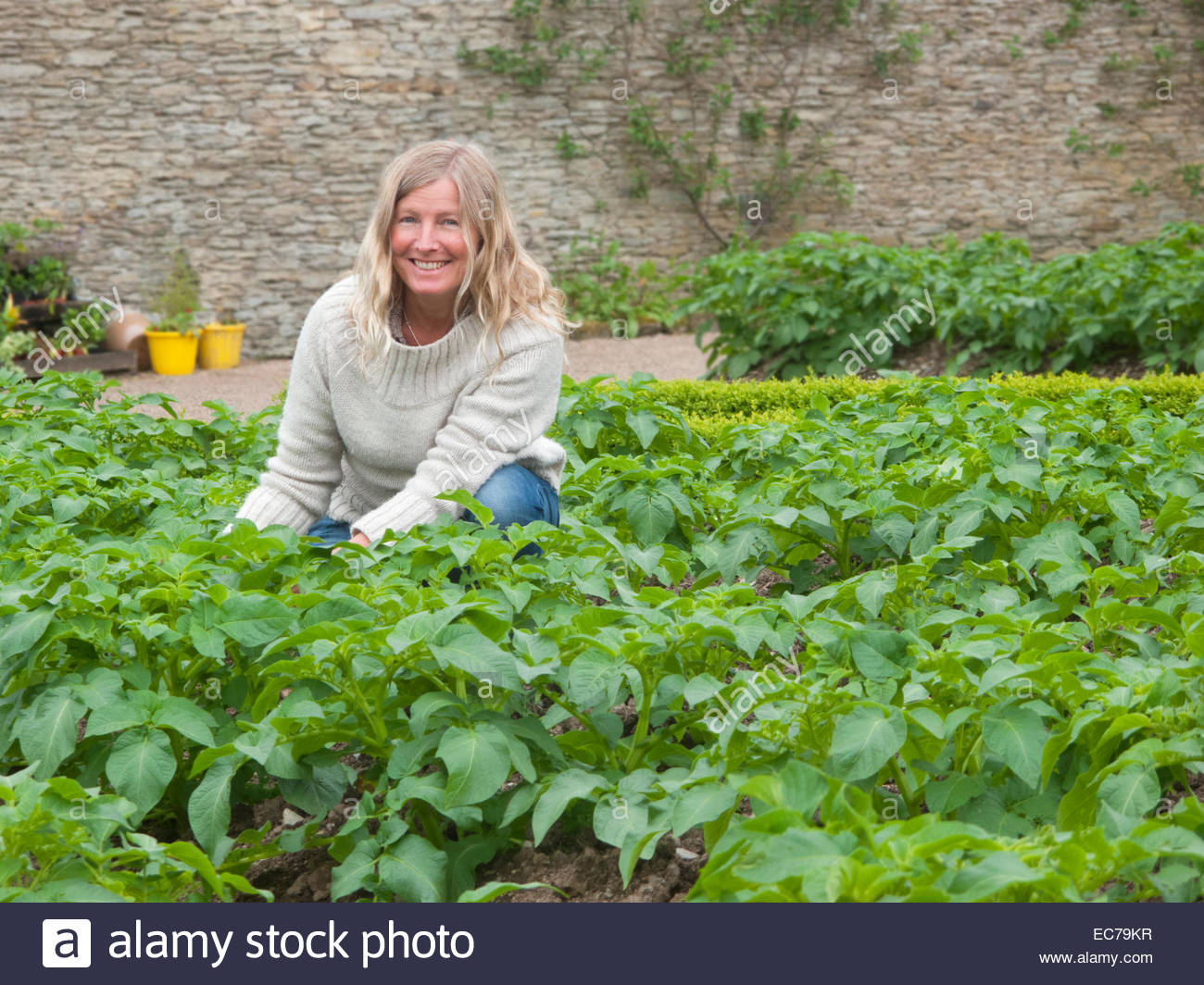 Portrait of woman gardening with potato plants - Stock Image