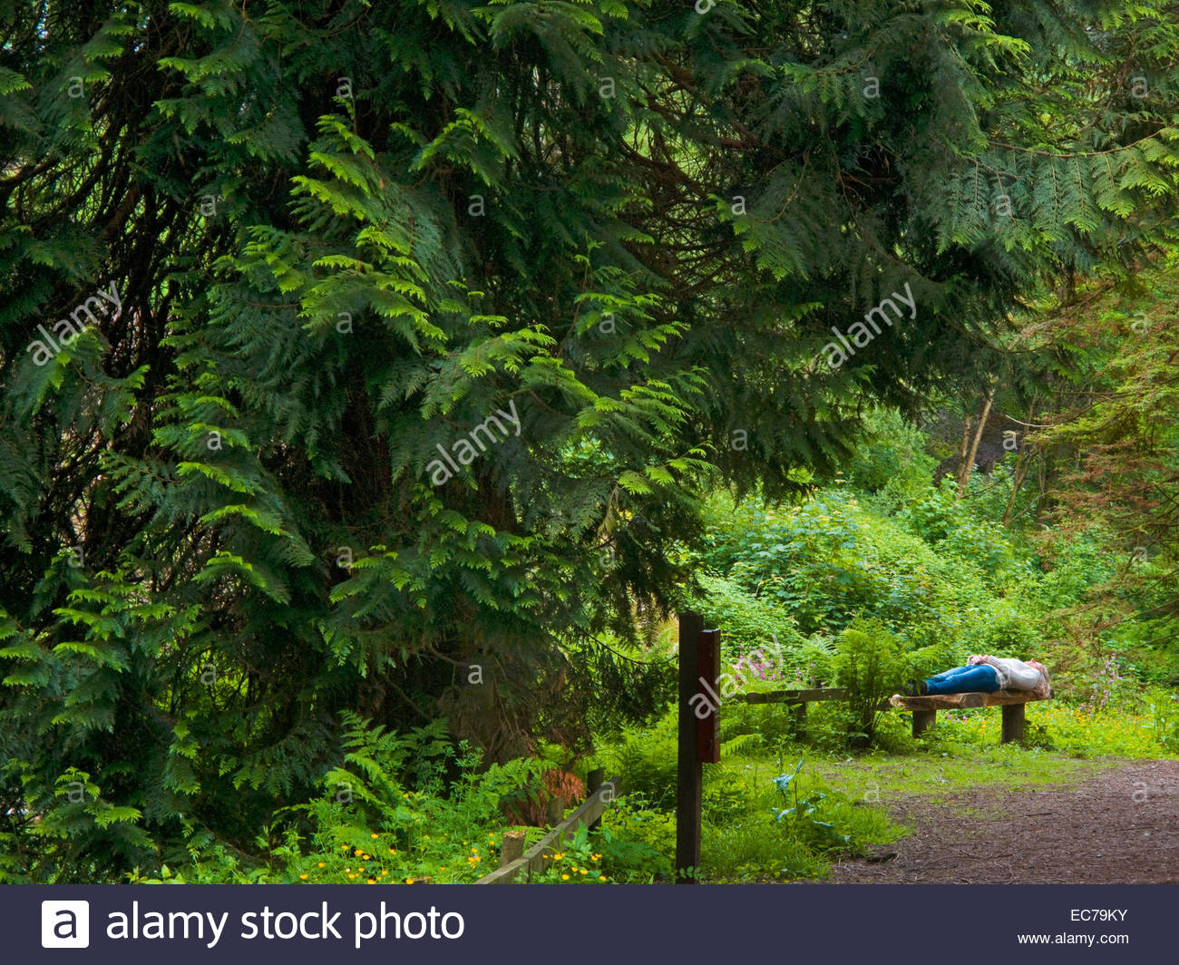 Woman lying on a bench in a forest - Stock Image