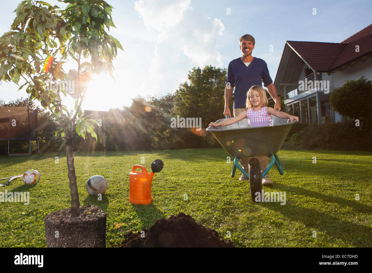 Father with daughter in wheelbarrow planting tree in garden - Stock Image