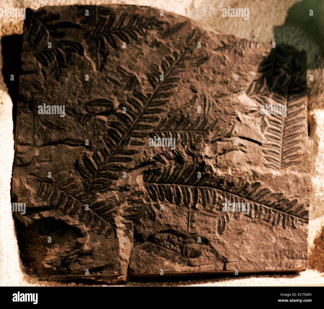 Pteromya tatei (Richardson and Tutcher), late triassic era moluscs - Stock Image