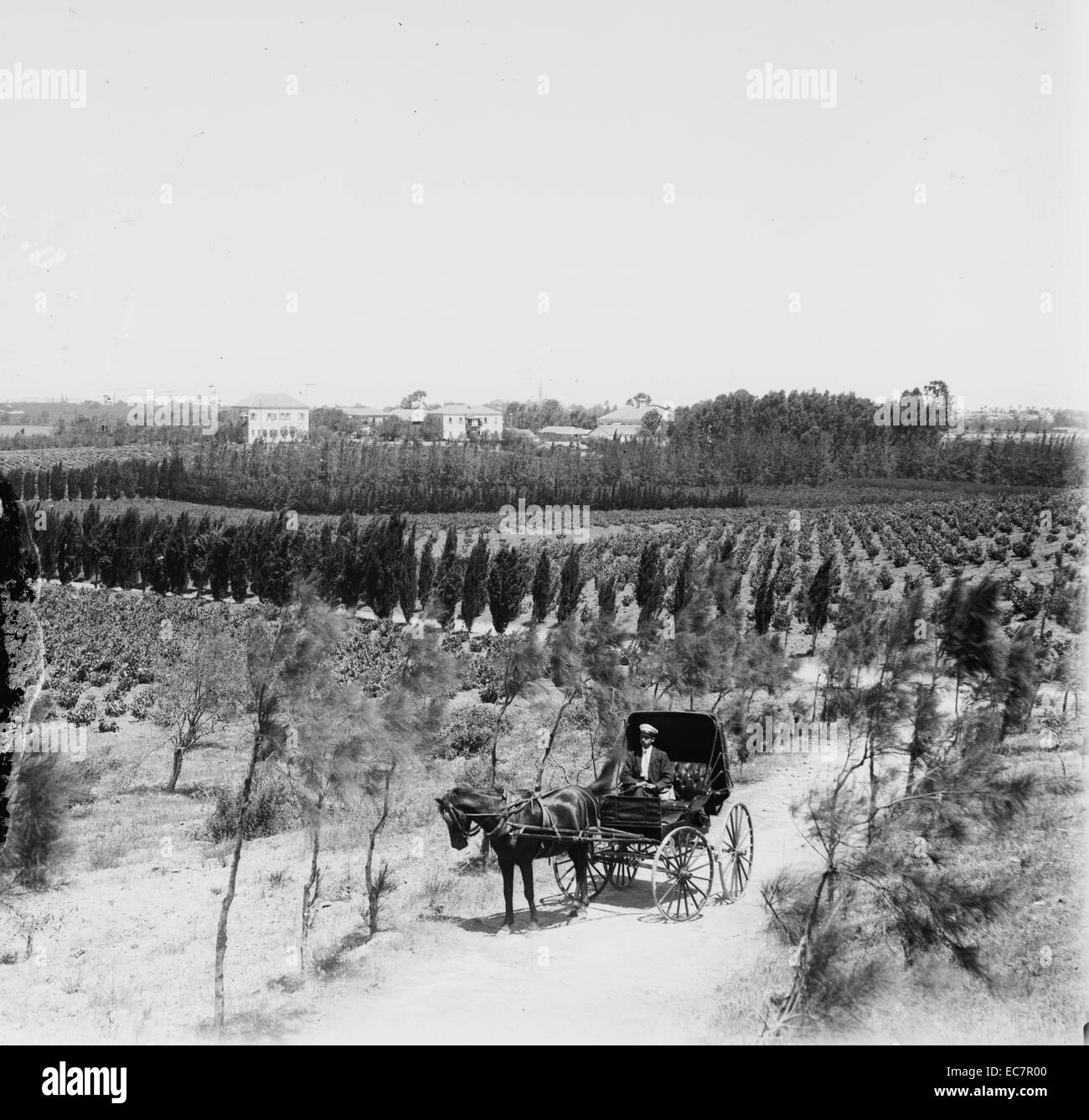 Jewish colony in Palestine. Photograph shows Mikveh (Mikveh) Israel Agricultural School with buildings in the background - Stock Image
