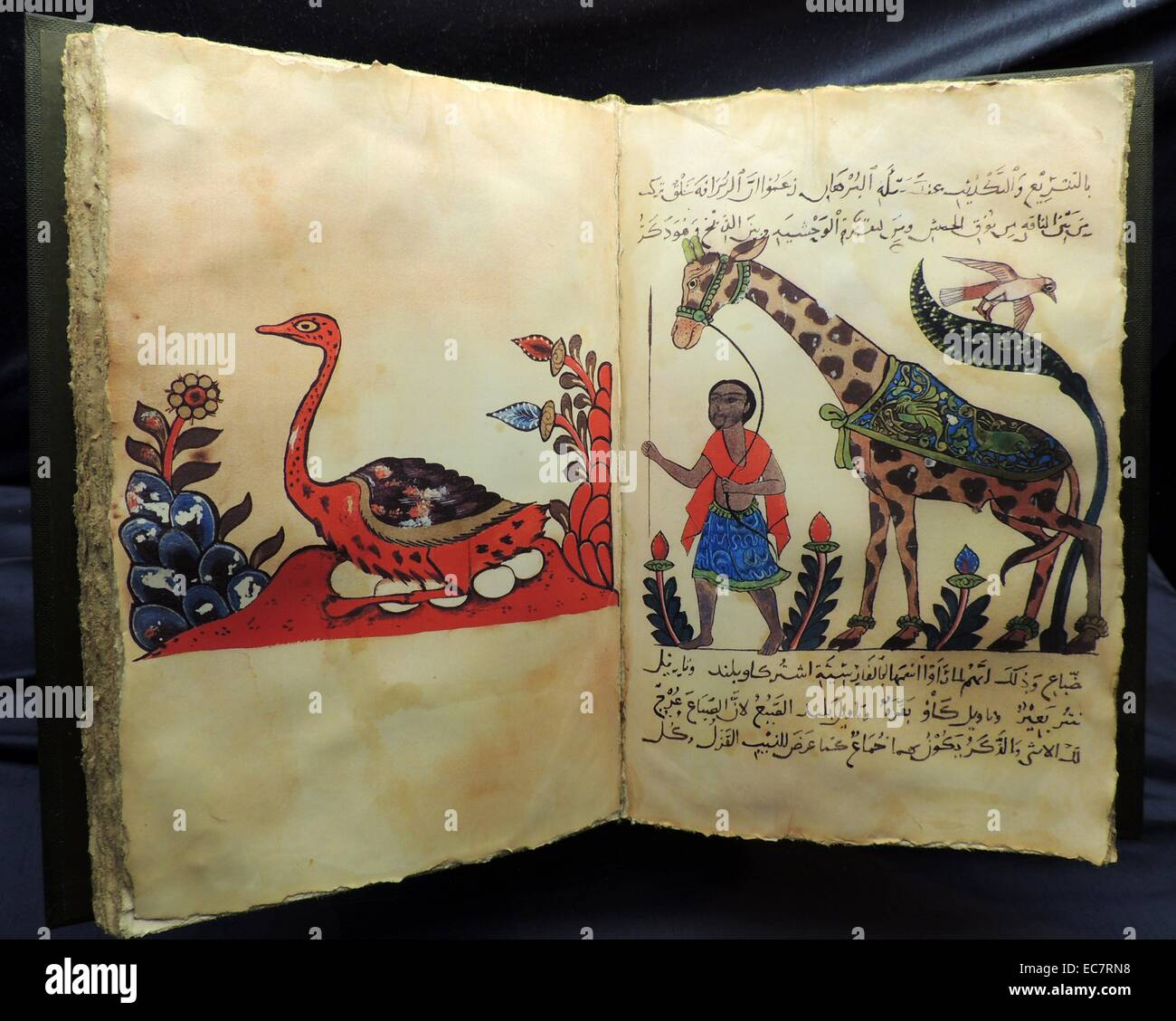 Cartography and Geography.Advances in zoology botany astronomy and navigation and information brought back by traders - Stock Image