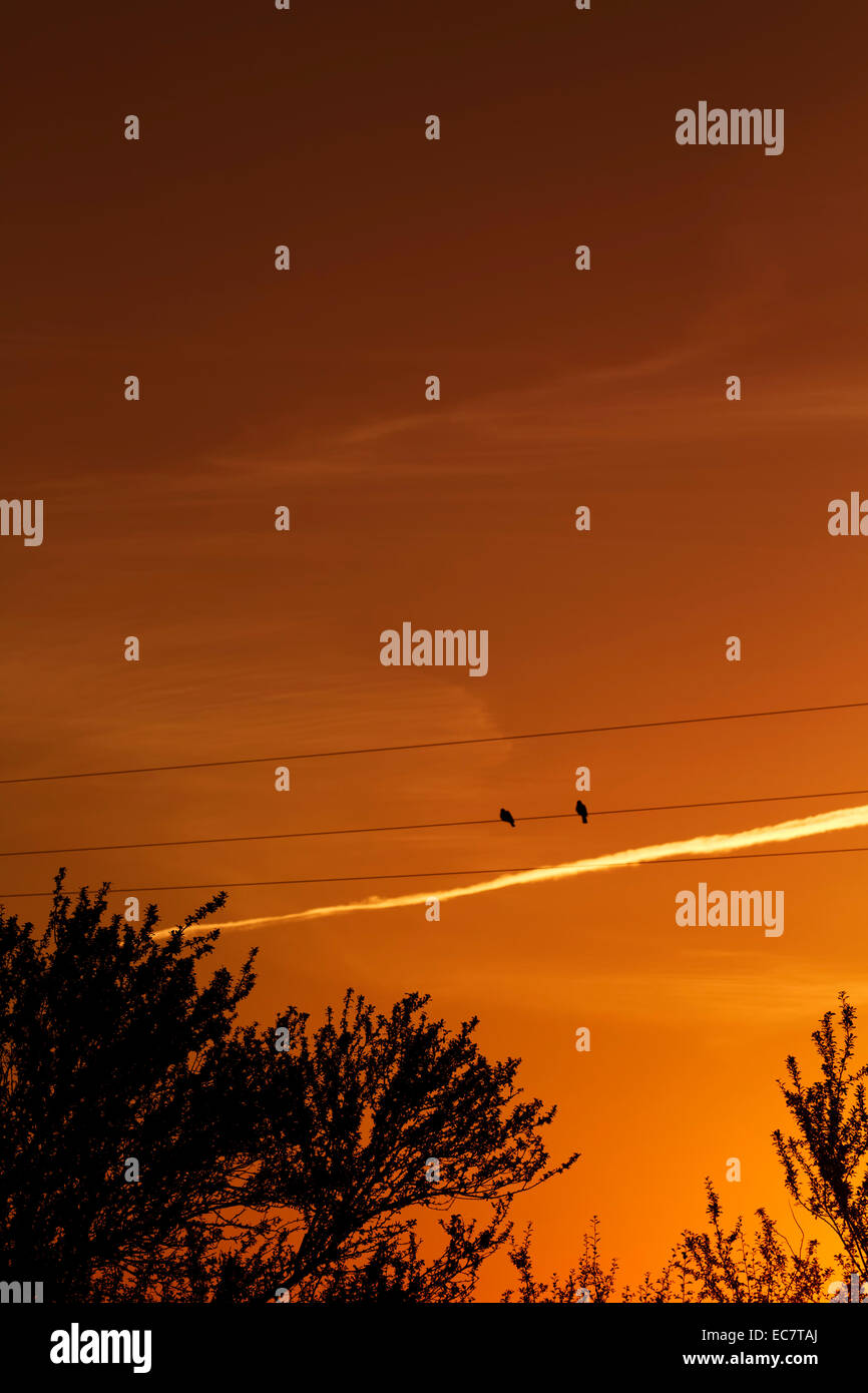 birds on a wire at sunset - Stock Image