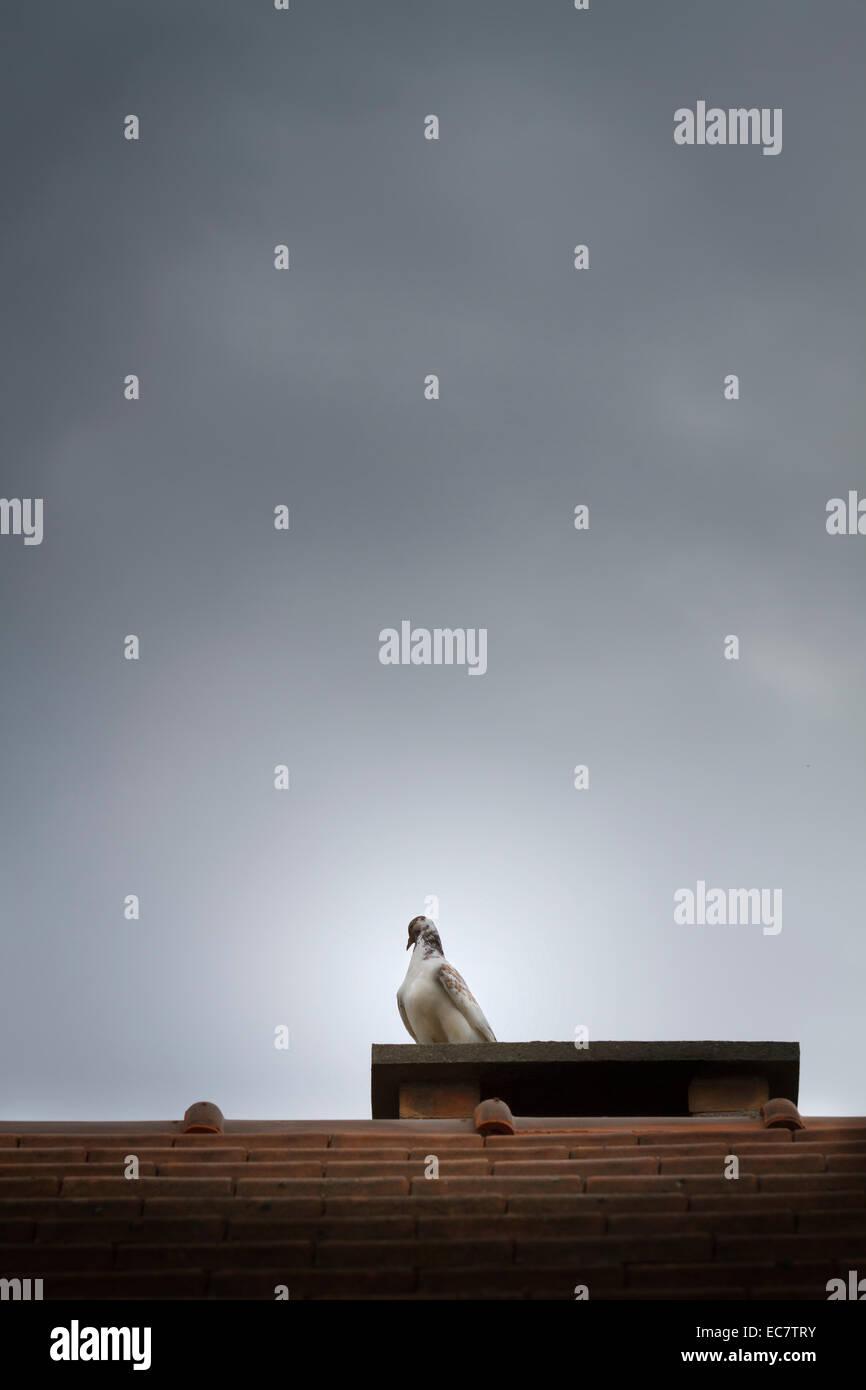 bird on chimney roof - Stock Image