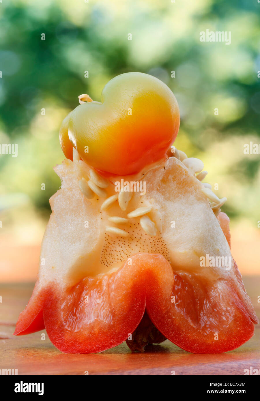 interior of raw red bell pepper - Stock Image