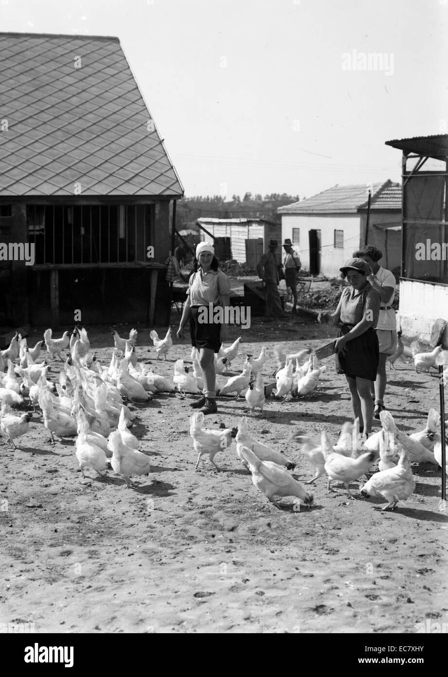 Zionist colonies on Sharon. Borochov, Girls farm, feeding poultry - Stock Image
