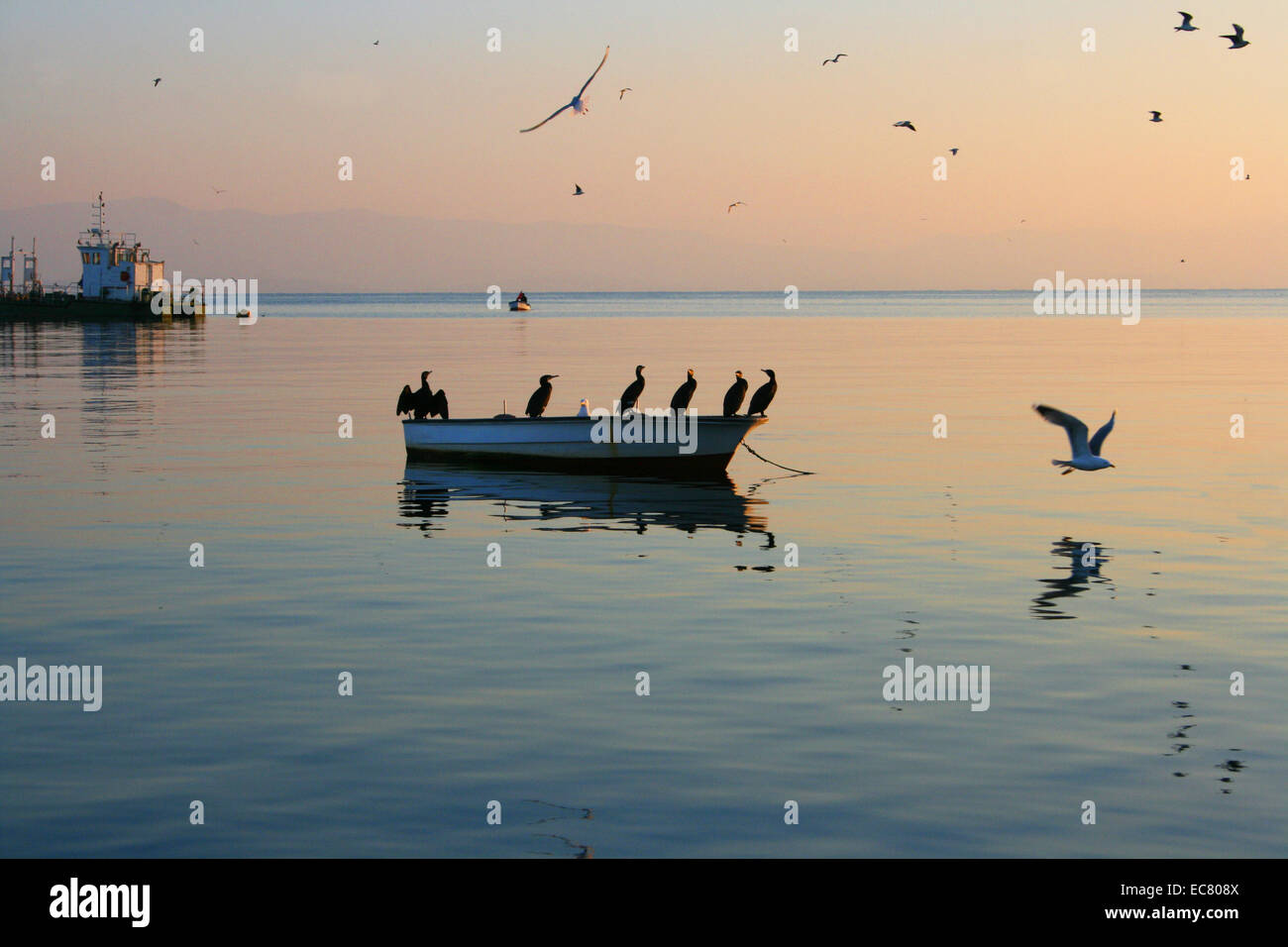 Seabirds on boat at sunset in Istanbul,Turkey - Stock Image
