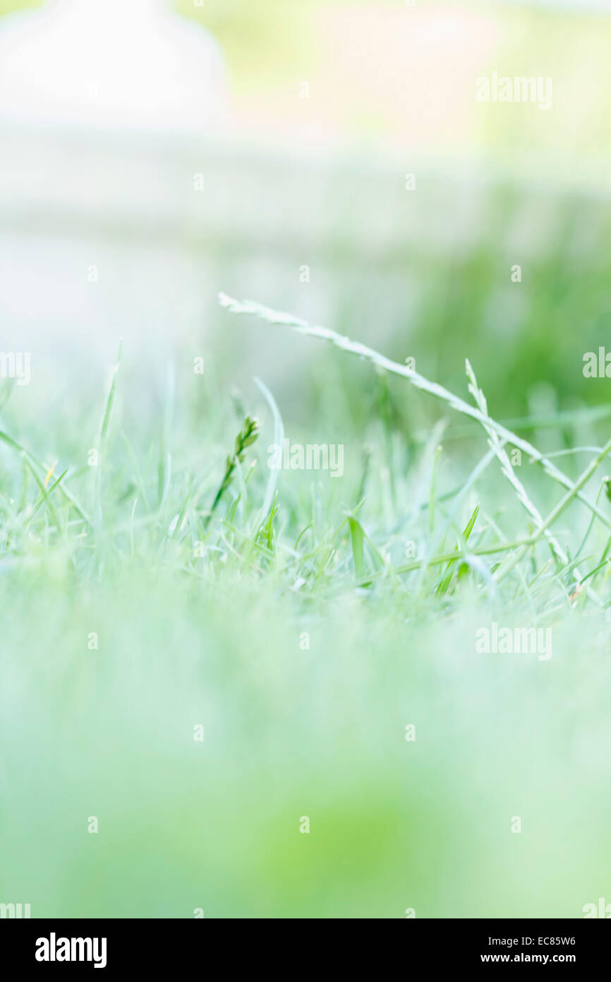 grass high key, abstract background - Stock Image