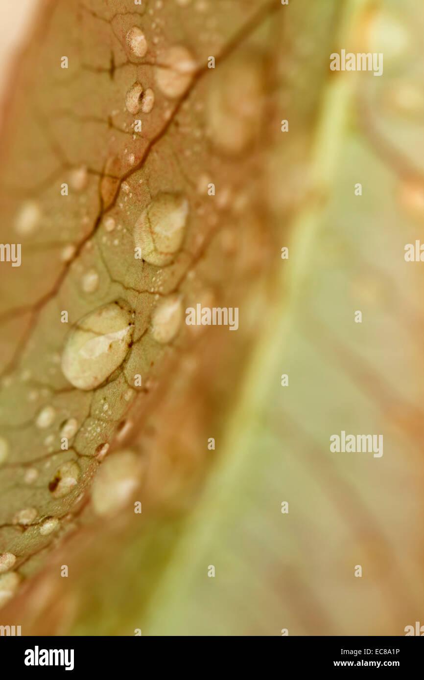 macro shot  leaf  droplets - Stock Image