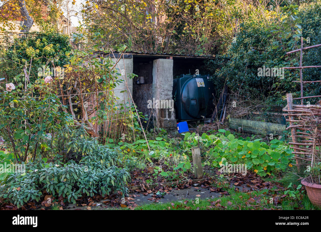 OIL TANK IN OVERGROWN AUTUMN GARDEN BEFORE TIDY UP FOR WINTER - Stock Image