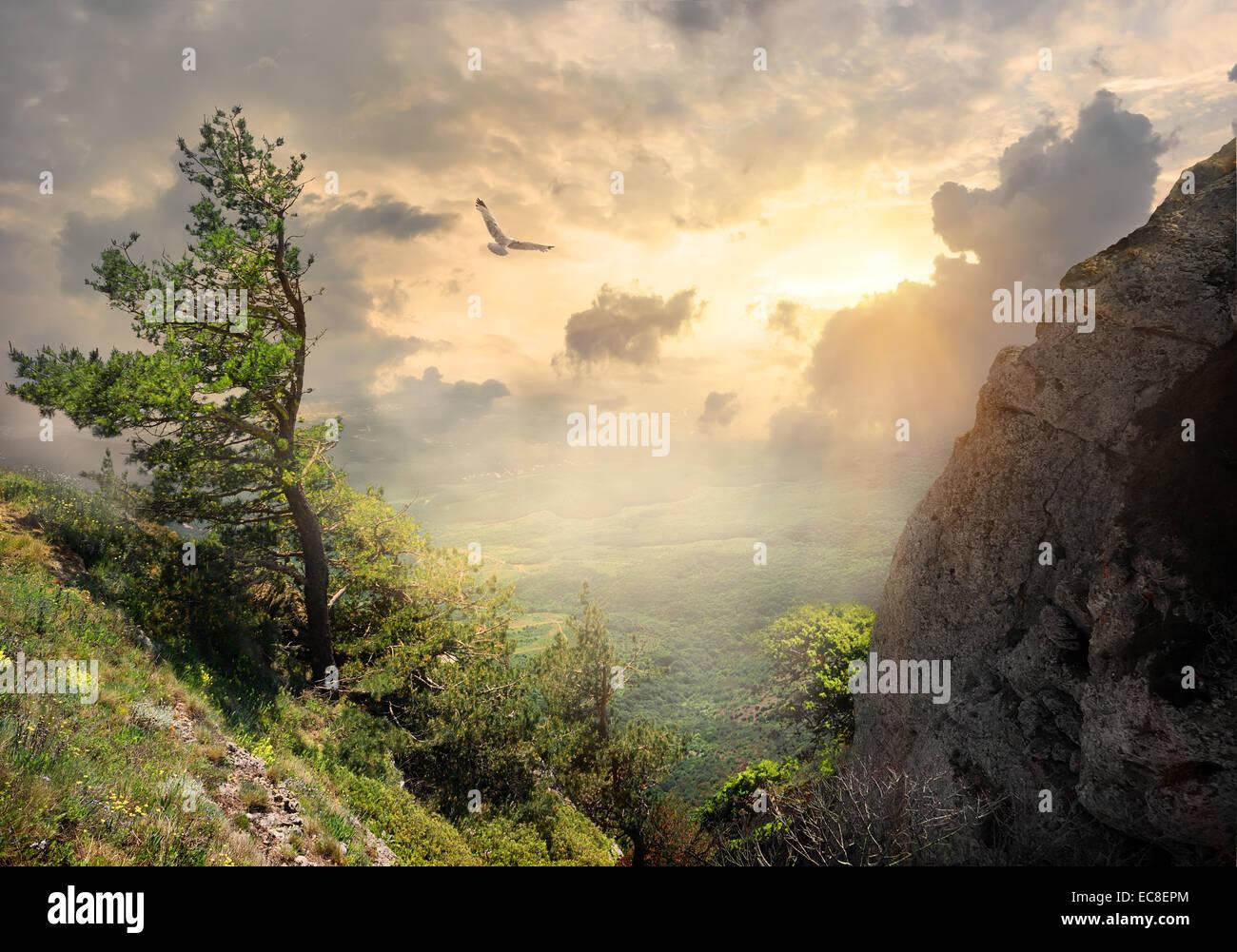 Bird over the big tree on mountain - Stock Image