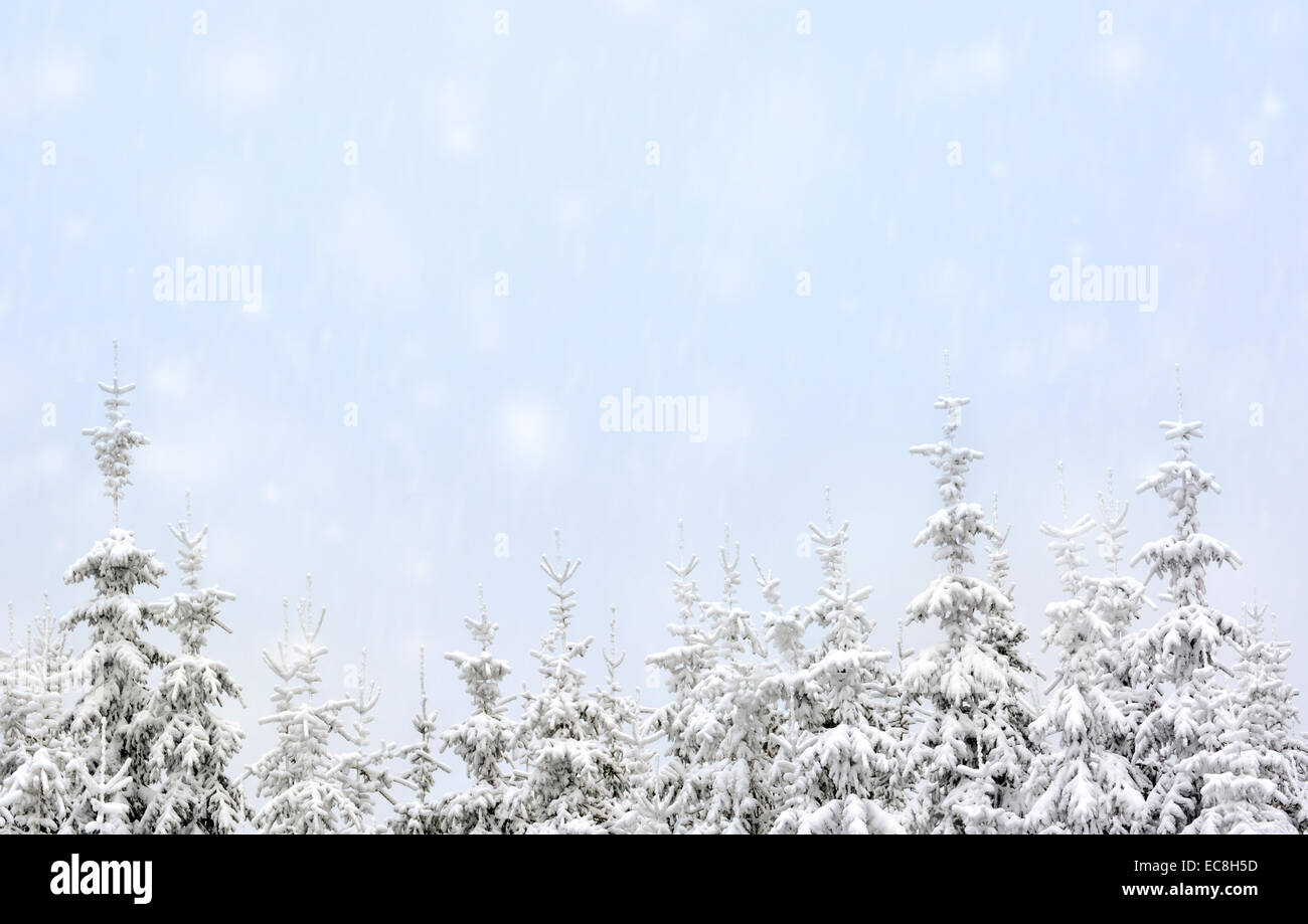 trees in mountains covered with fresh snow Stock Photo