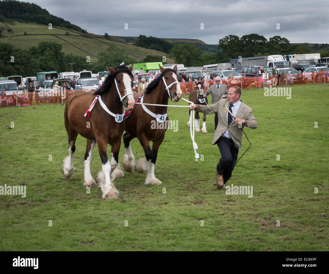 Showing Shire Horses at Rosedale Show, North Yorkshire - Stock Image