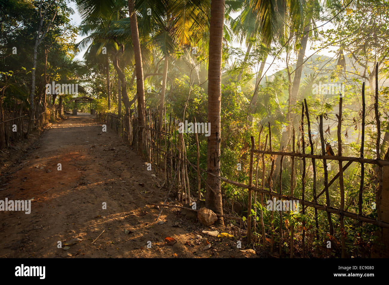 Deserted road in on tropical island - Stock Image