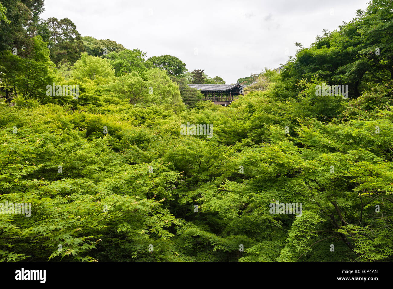 Kyoto, Japan. The Tsuten-kyo bridge at Tofuku-ji temple crosses a valley filled with Japanese maple trees (acer - Stock Image