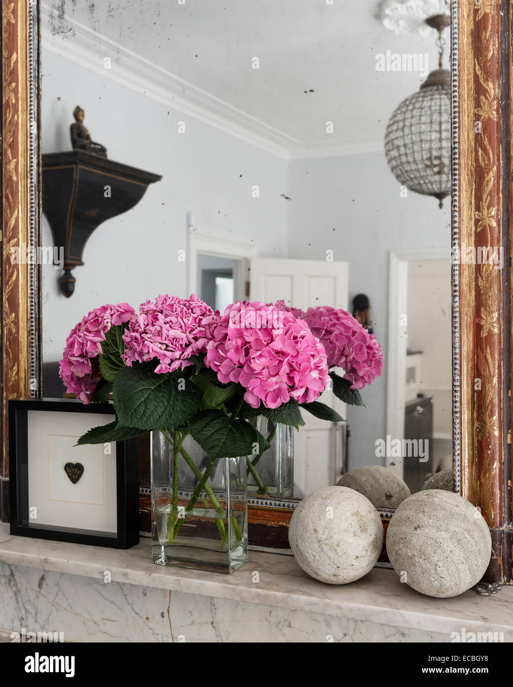 Hydrangeas in vase on mantelpiece with gilt framed mirror - Stock Image