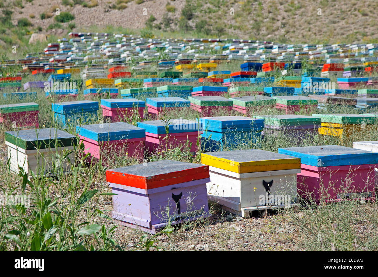 Beekeeper's bee yard with colourful painted wooden beehives with honey bees in Iran - Stock Image