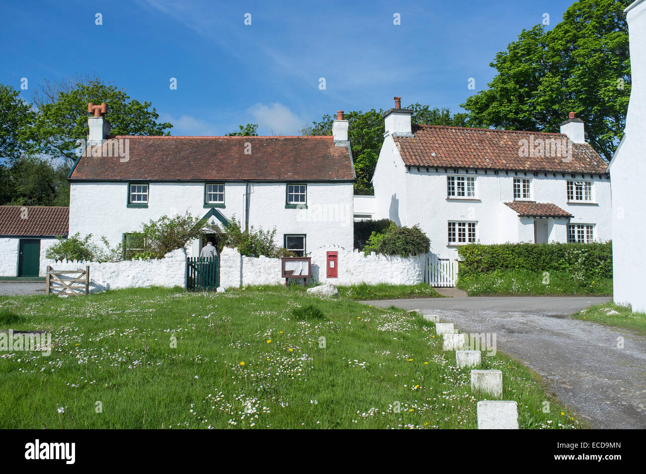 Whitewashed Cottages in Penrice Village on the Gower Peninsular Wales - Stock Image