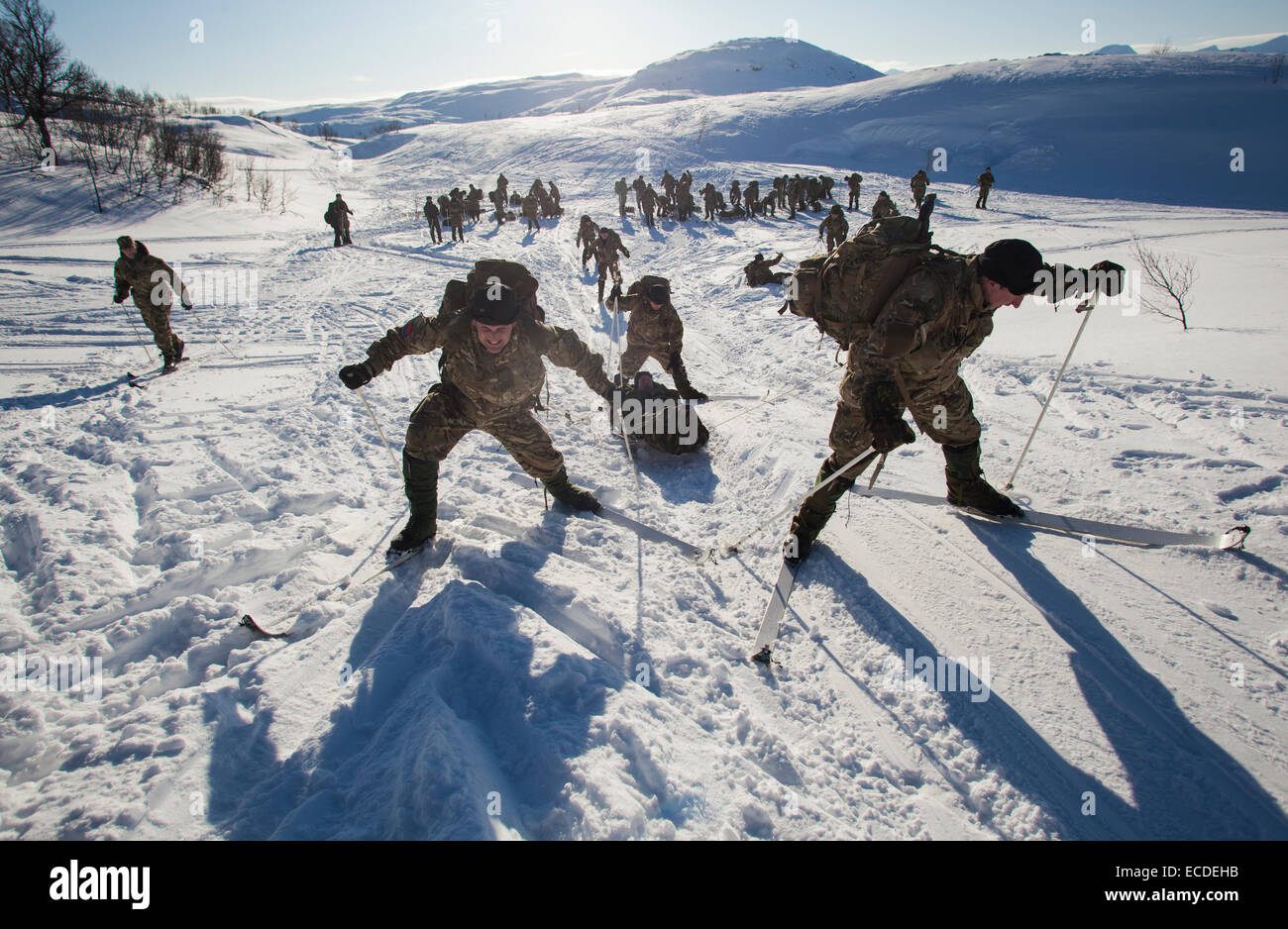 British Royal Marines go through a casualty evacuation exercise pulling and pushing a sled while on skis in Bardufoss, - Stock Image