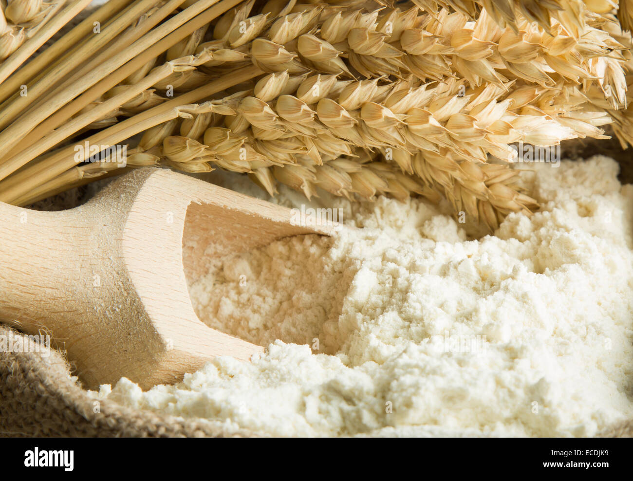 Flour in burlap bag and wheat ears - Stock Image