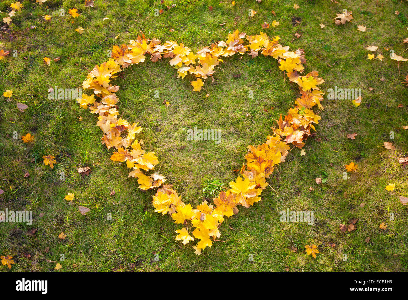Yellow autumn leaves heart shape grass from above - Stock Image