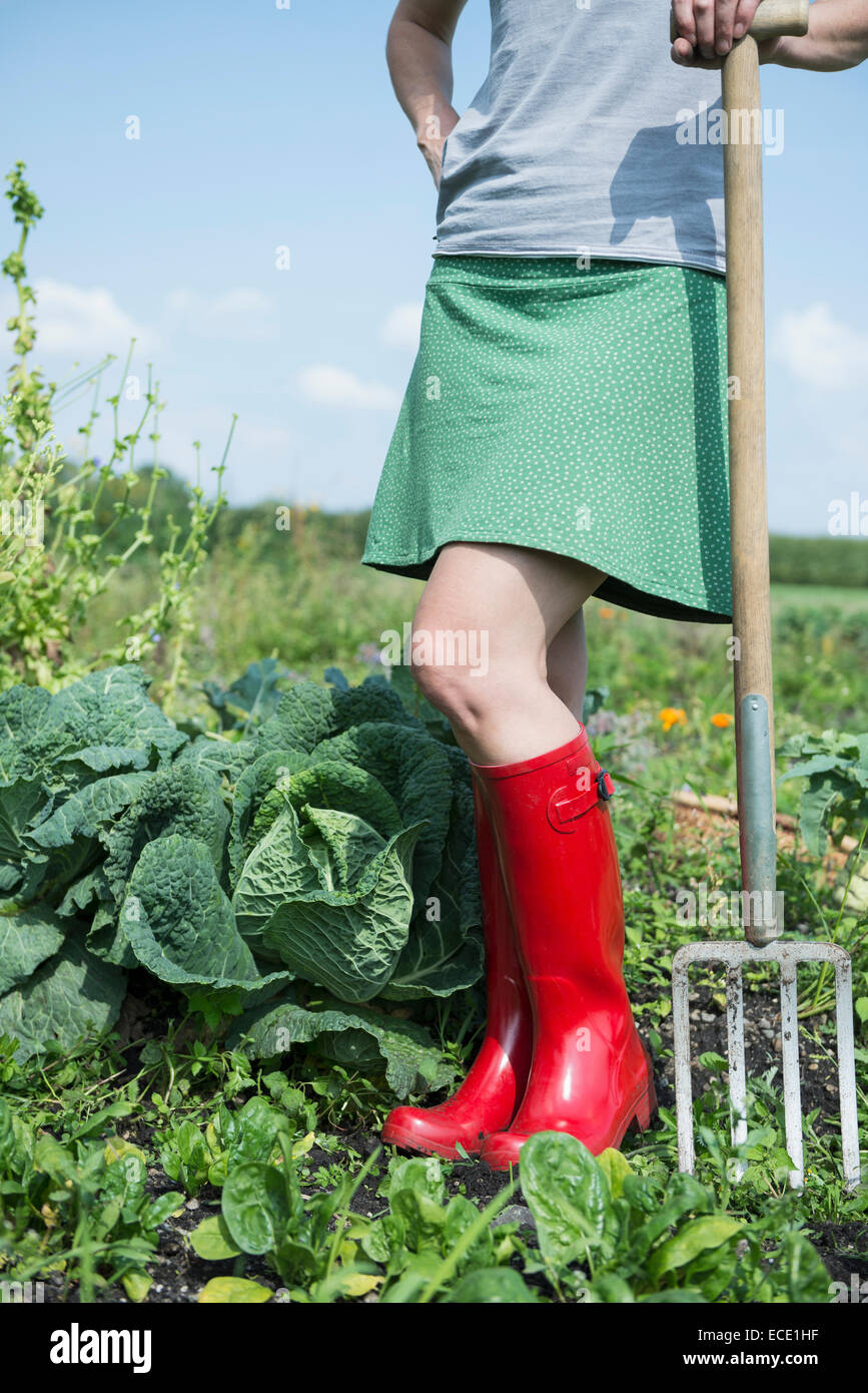 Woman garden allotment cabbage plants - Stock Image