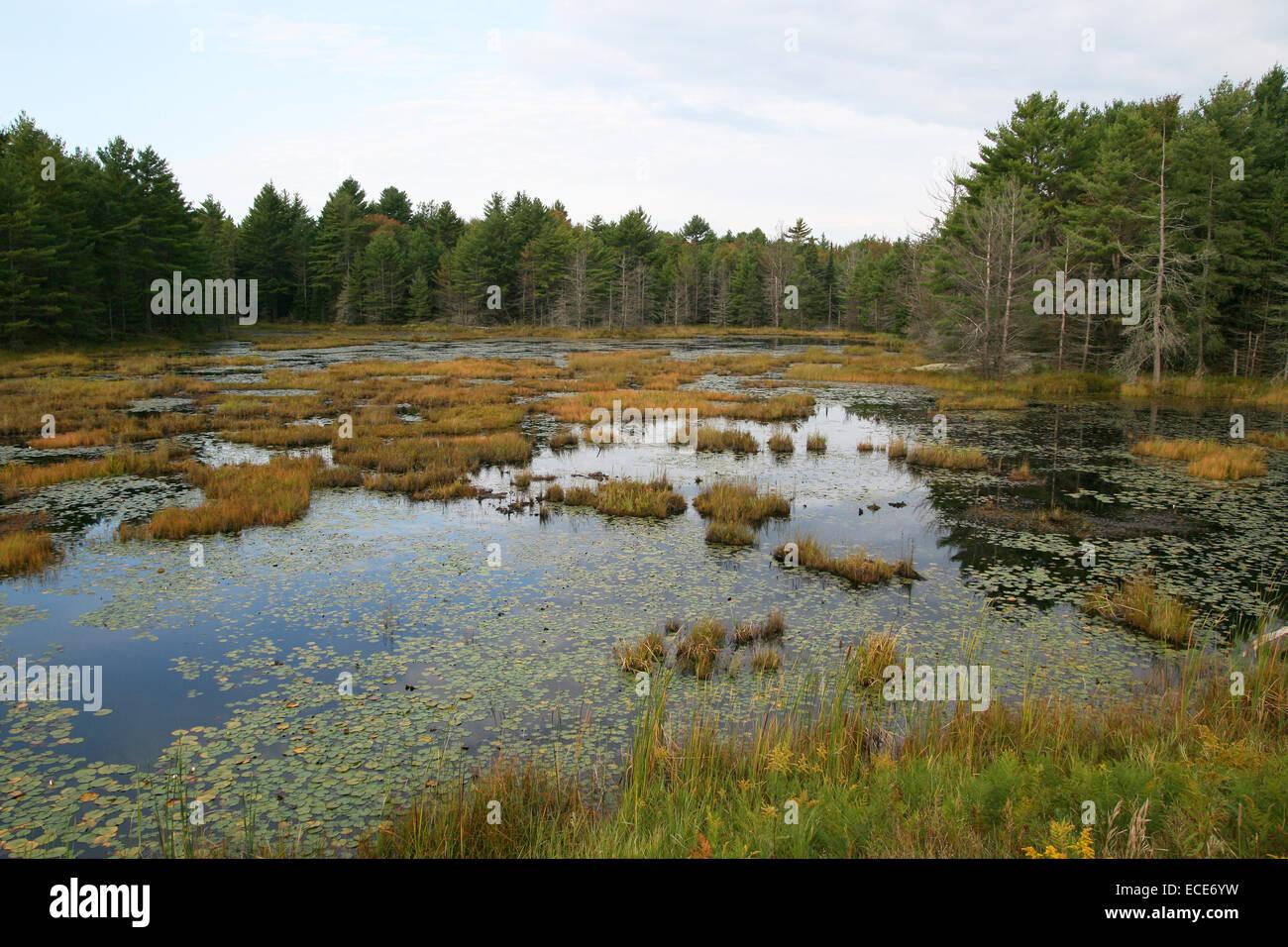 Sumpf Sumpflandschaft Suempfe See Seen Kanada Canada Canadian Baum einzeln Gras Graeser Baeume Pflanze Pflanzen - Stock Image