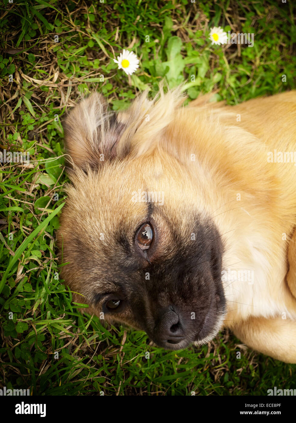 Portrait of cute little doggy on the grass. - Stock Image