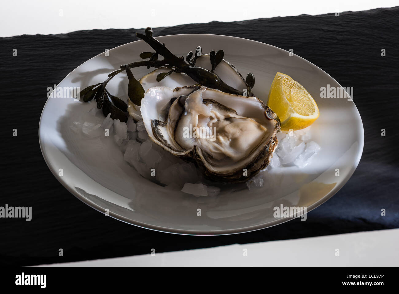 Shell, delicacy, expensive, precious, fine, studio, black background, magical light innards, shell, clam shell, - Stock Image