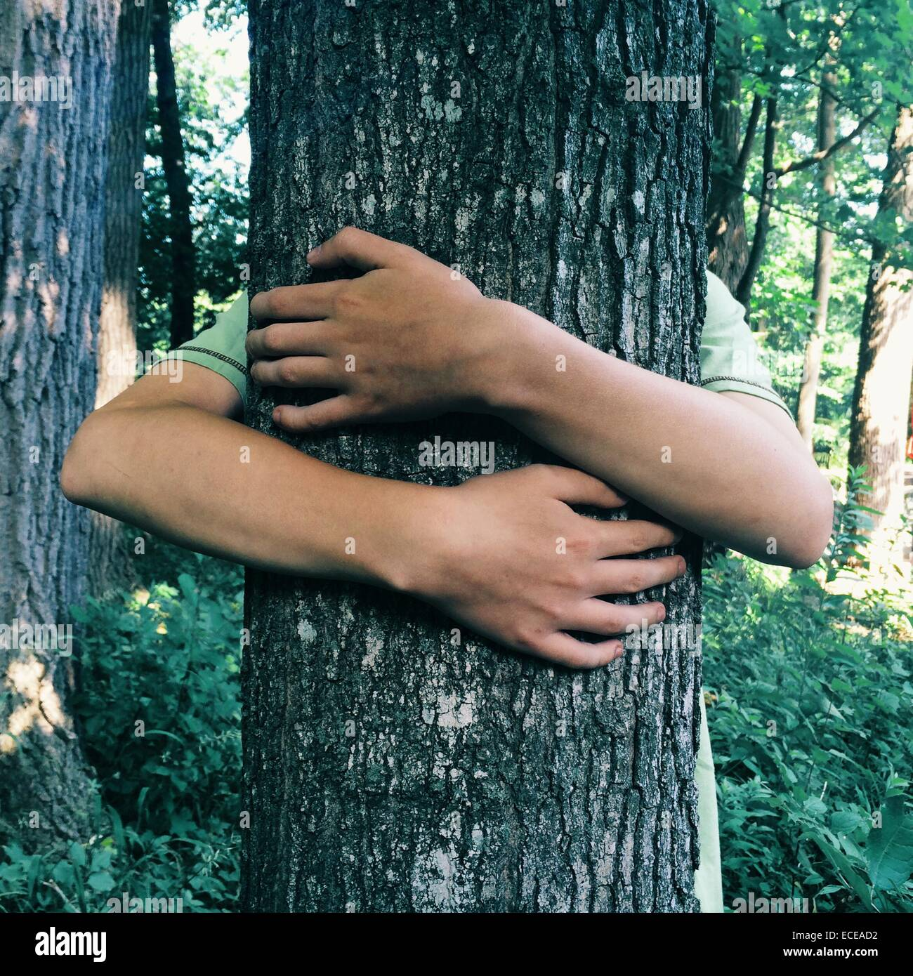 Teenage boy hugging tree in forest - Stock Image
