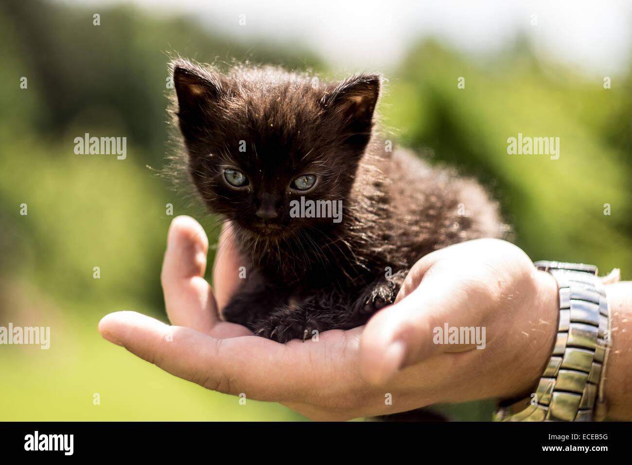 Kitty in backyard - Stock Image