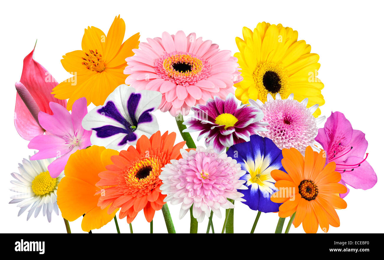 Flower Bouquet Collection of Various Colorful Flowers and Stock ...