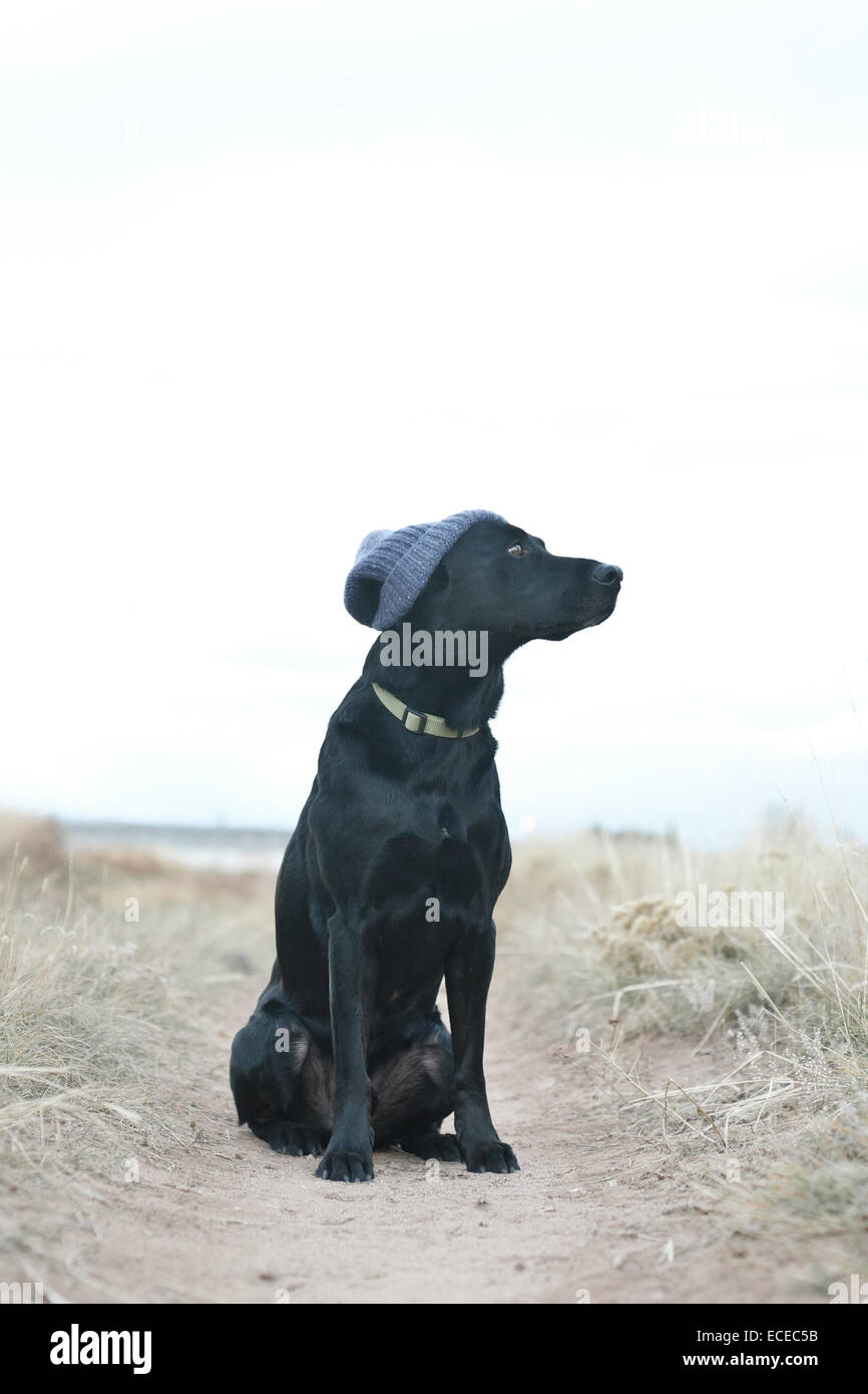 Black dog wearing knit cap sitting on footpath - Stock Image