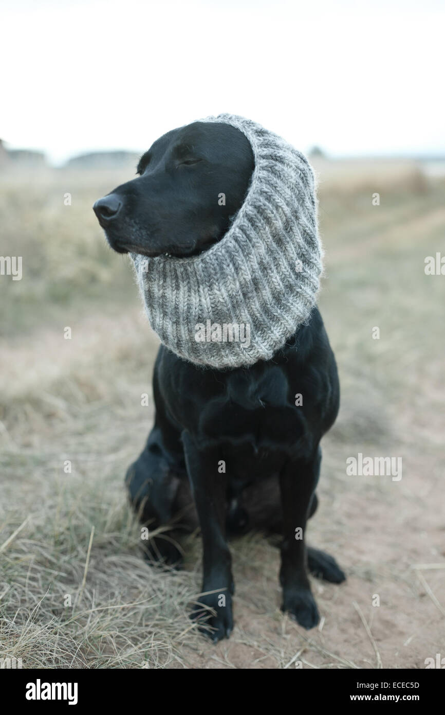 Black dog wearing gray knit scarf sitting on dirt road Stock Photo