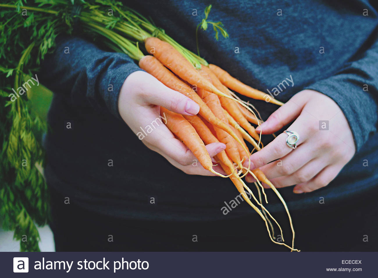 United Kingdom, England, Warwickshire, Stratford-upon-Avon, Young woman holding home grown carrots in hands - Stock Image