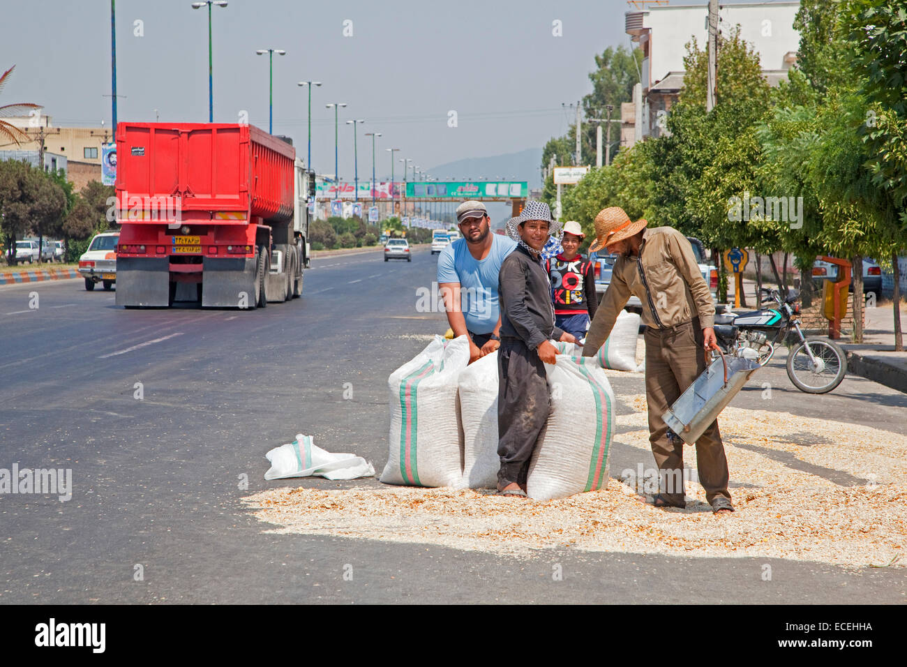 Iranian workers drying seeds on the street in the city Azadshahr, Golestan Province, Iran - Stock Image