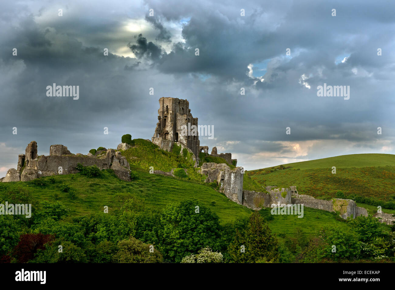 The Ruins of Corfe Castle, (National Trust), Isle of Purbeck, Dorset, England, Uk. - Stock Image