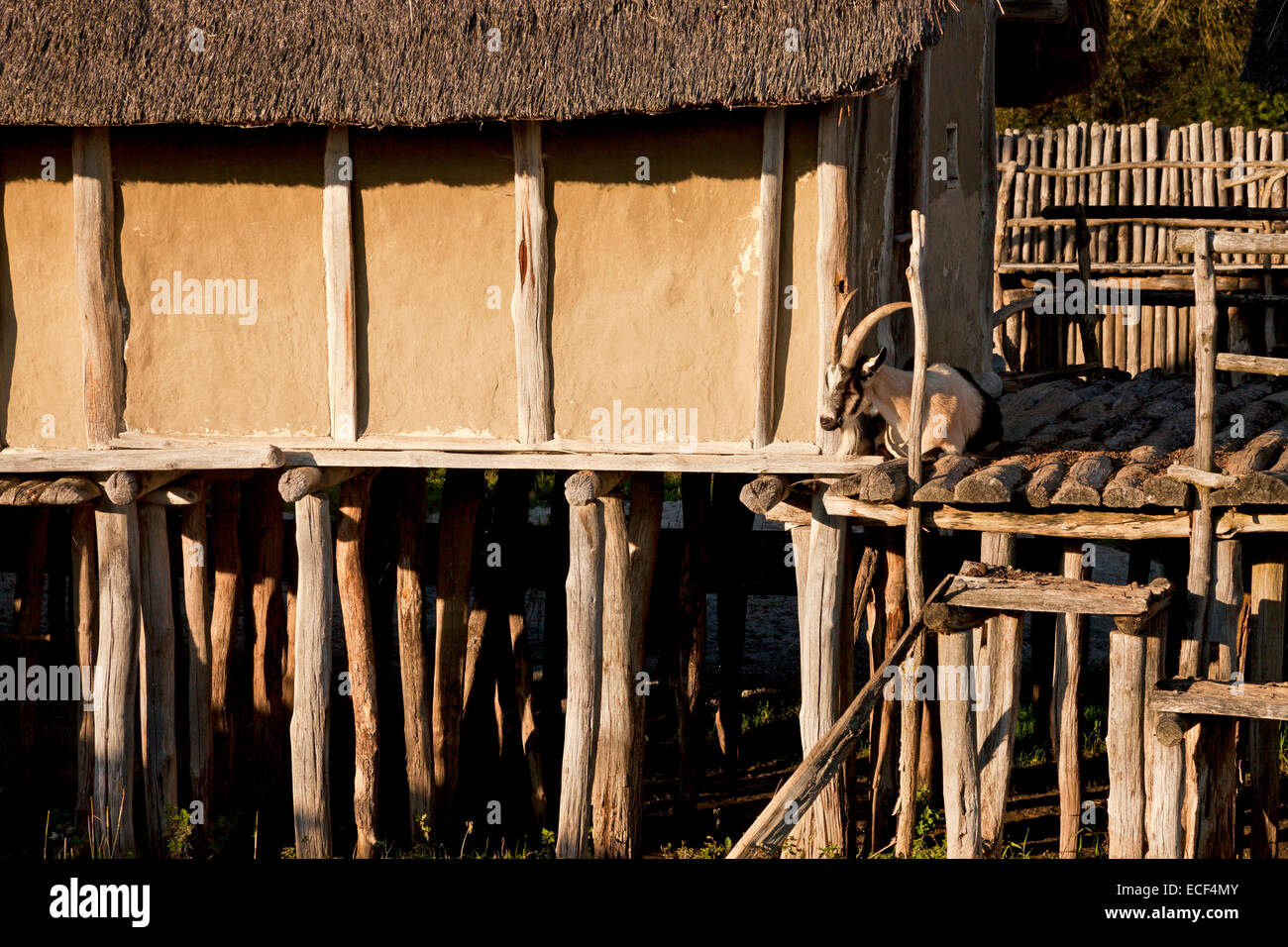 reconstructions pile dwellings at The Pfahlbauten open air museum in Unteruhldingen Lake Constance, Germany - Stock Image