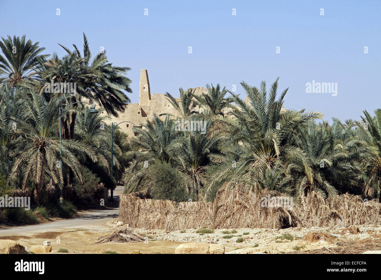 The Temple of the Oracle (also known as the Temple of Amun) rises over the palm trees in the village of Aghurmi Stock Photo