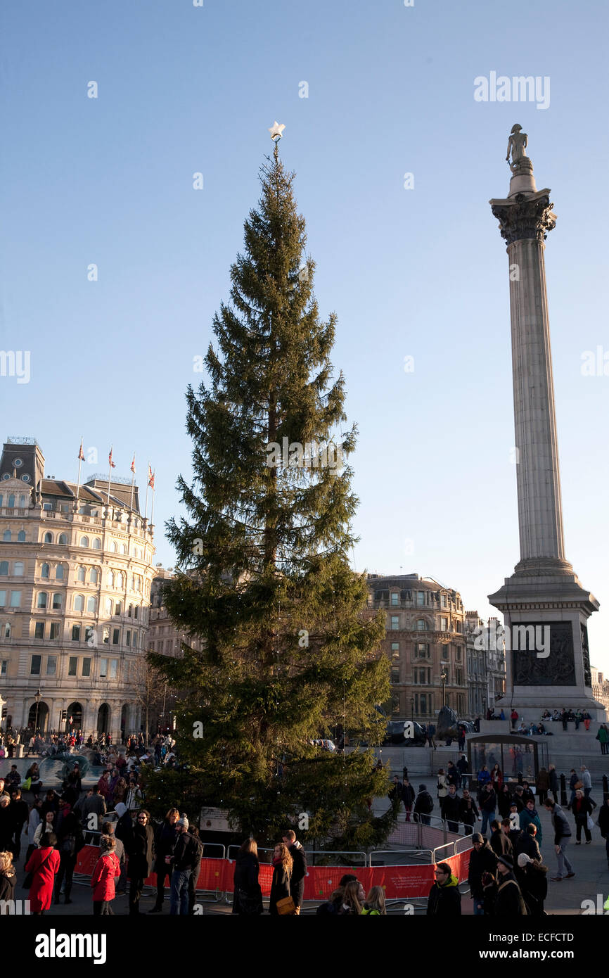 The Traditional Christmas tree from Norway in Trafalgar Square Stock ...
