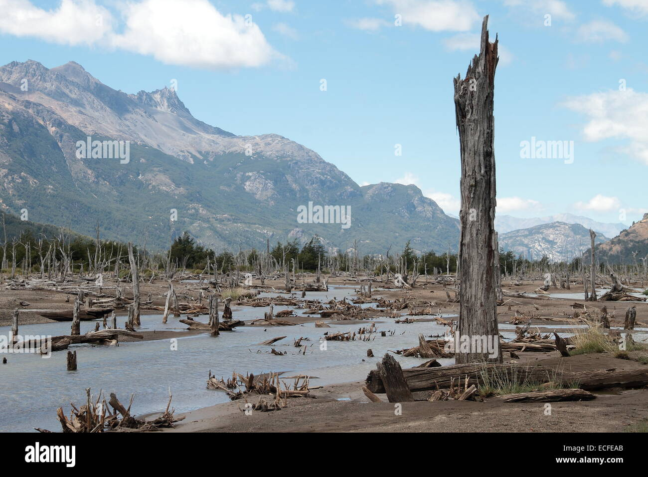 Dead Forest caused by the action of a Volcano, Aysen, Patagonia, South of Chile - Stock Image