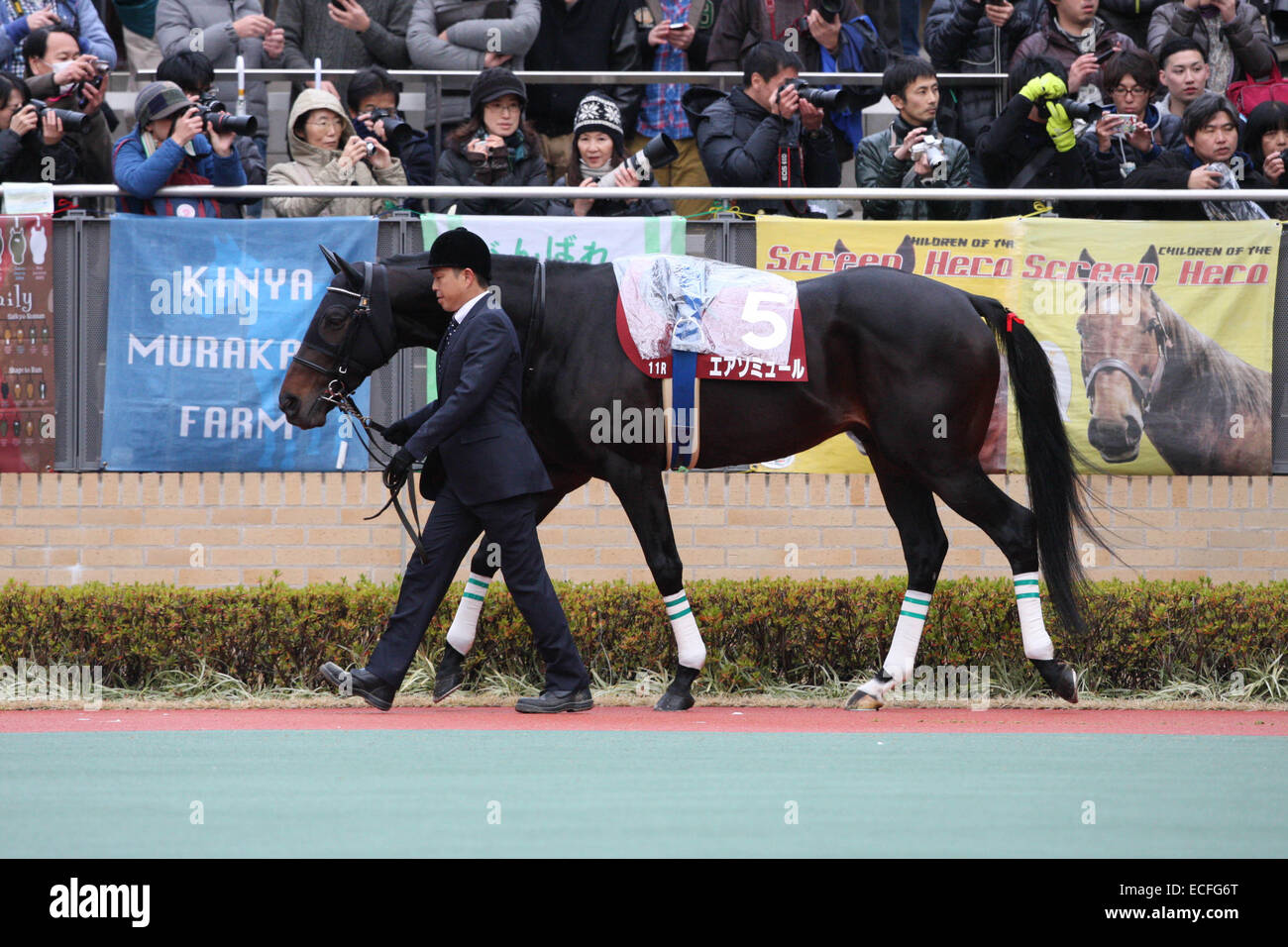 Aichi, Japan. 6th Dec, 2014. Air Saumur Horse Racing : Air Saumur is led through the paddock before the Kinko Sho - Stock Image