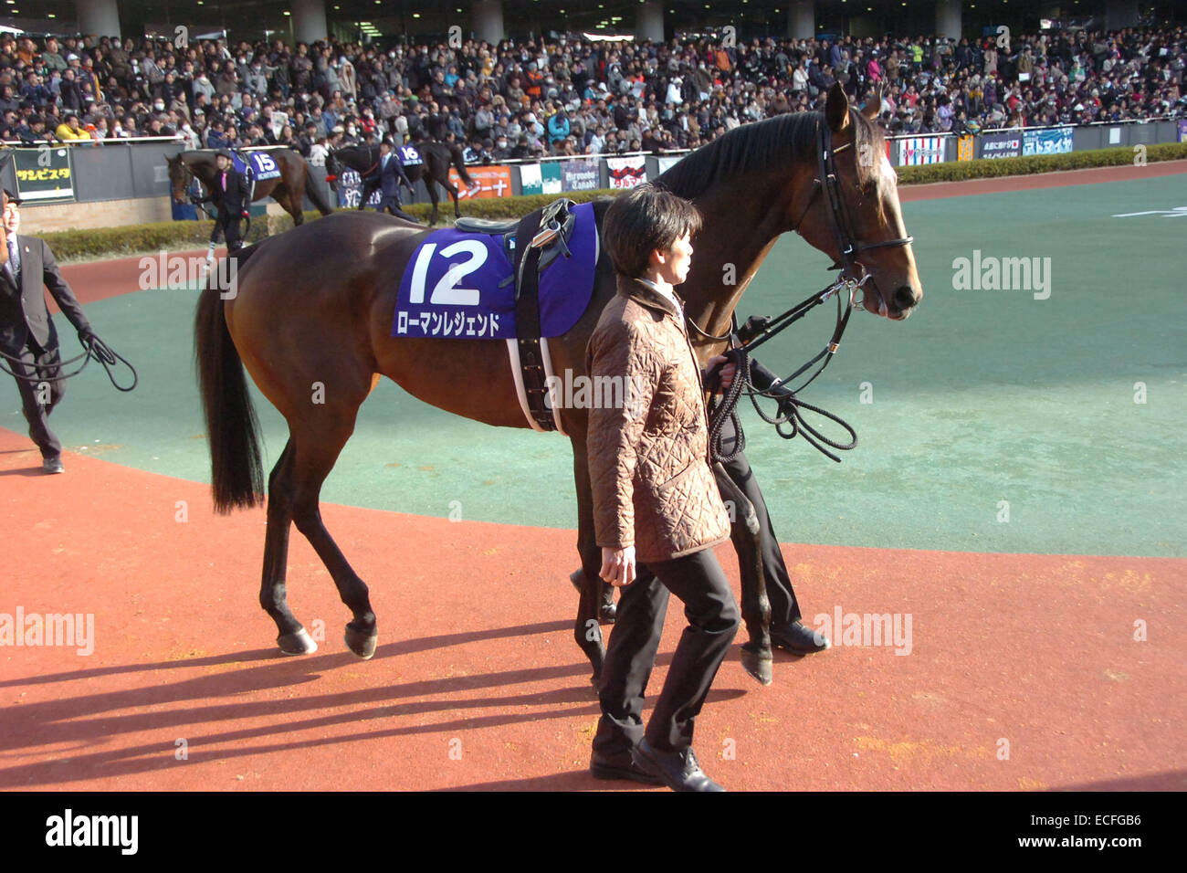 Aichi, Japan. 7th Dec, 2014. Roman Legend Horse Racing : Roman Legend is led through the paddock before the Champions - Stock Image