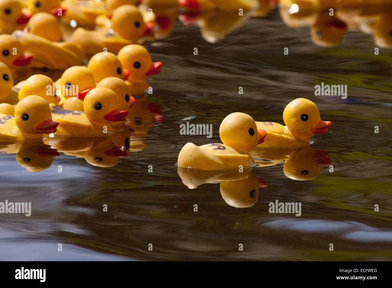 Yellow Rubber Ducks In Line Stock Photos & Yellow Rubber Ducks In ...
